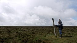 Stick in the moor