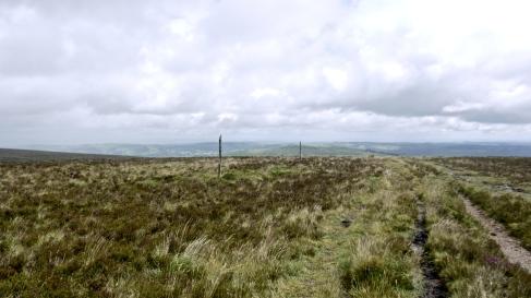 Sticks in the moor