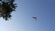 bird overhead