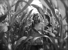 In the maize