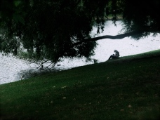 Tree, canal, person II