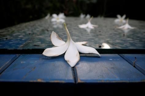 Petals down