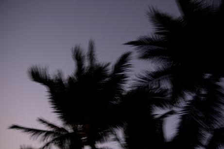 Fuzzy palm trees